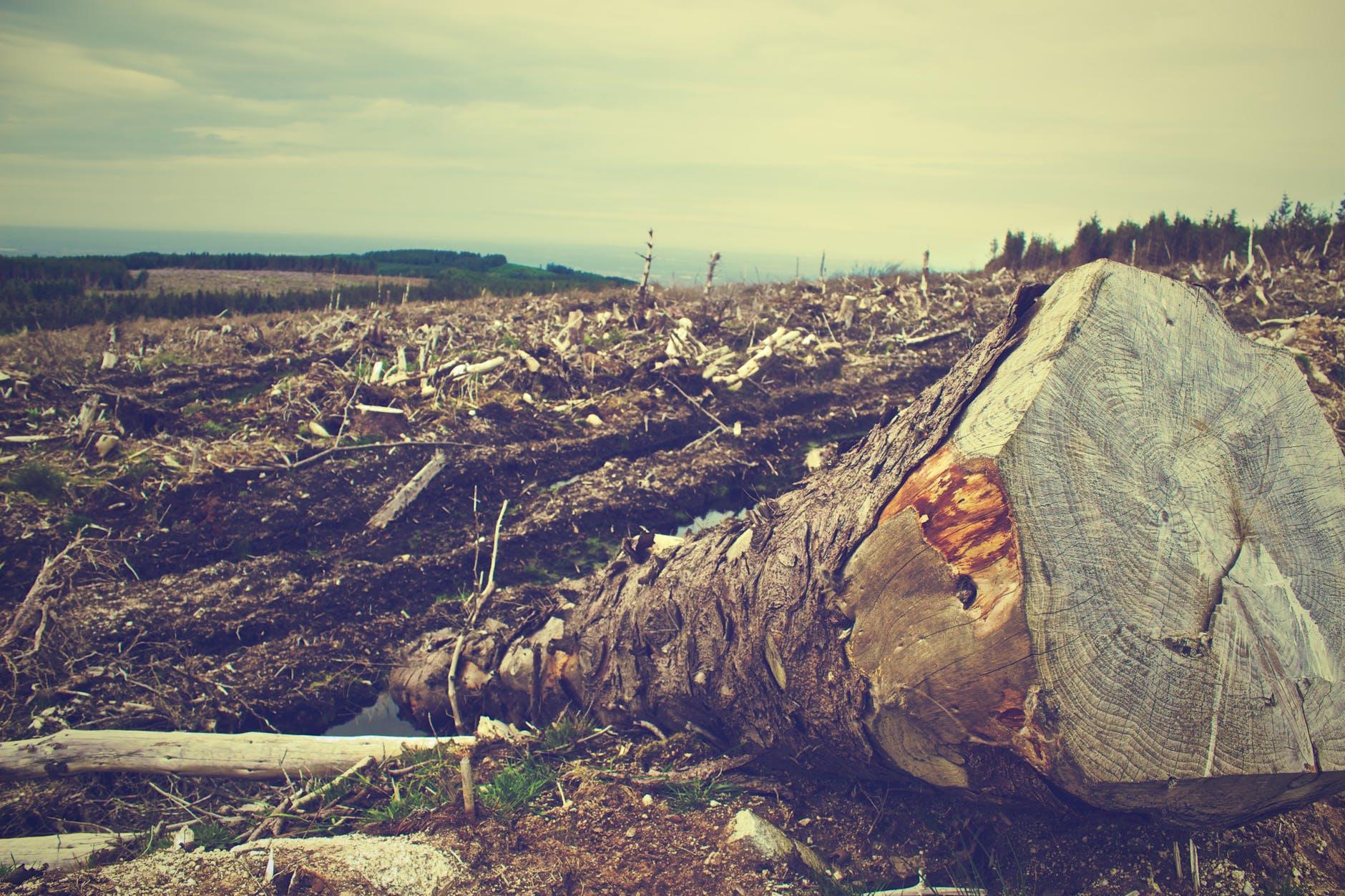 clearing desolation destruction fallen tree