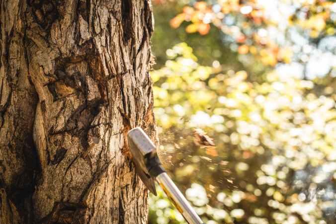 cut a tree fell a tree ax axe
